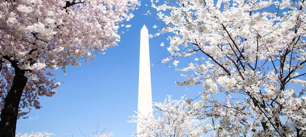 12 Amazing Places to Visit in 2016: Cherry Blossom Festival in Washington, D.C.