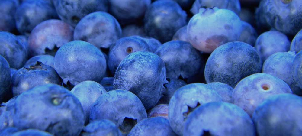 close up of blueberries