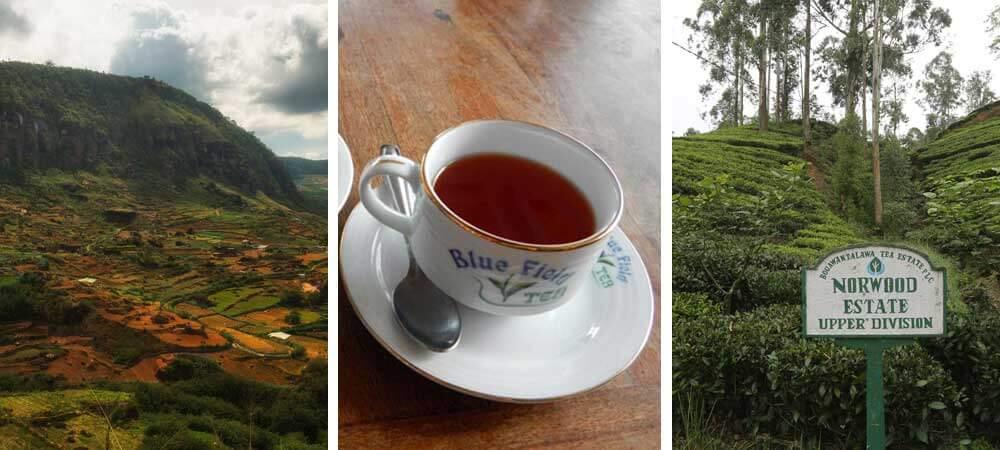 Tea in Sri Lanka