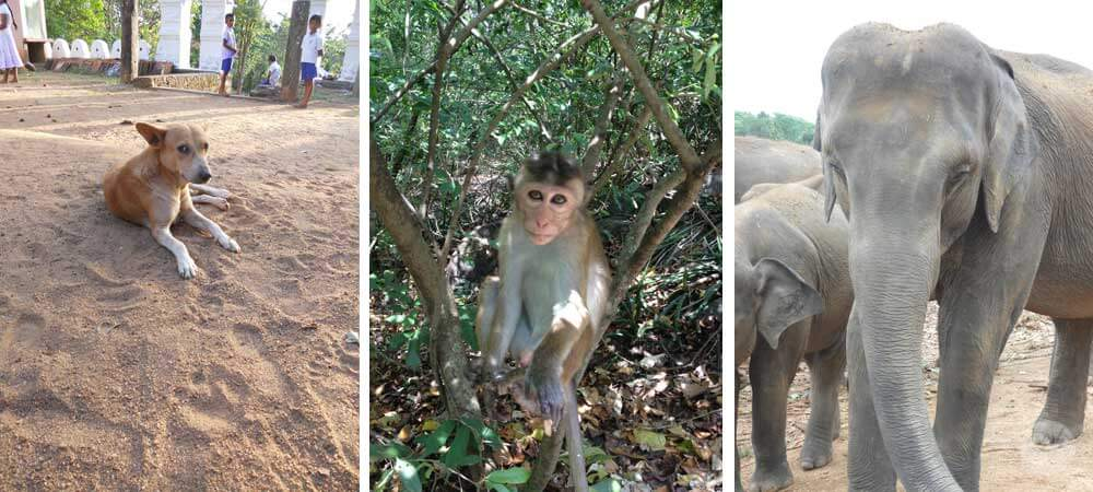 Sri Lanka is an excellent destinations for wildlife lovers. There are several national parks that offer safaris, plus you might just see an elephant or monkey just hanging out!