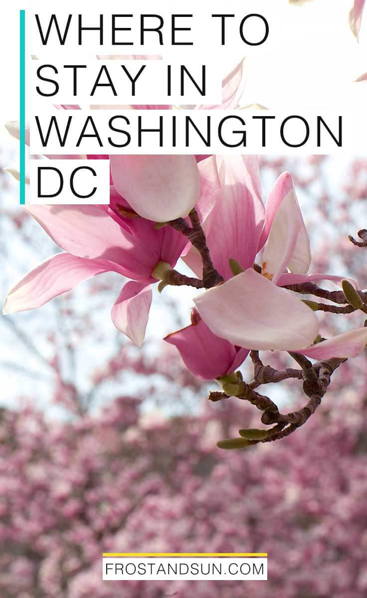 Where to stay in Washington, DC, from budget hostels + hotels to serious luxury offerings. Pin me if you're ready to visit DC!