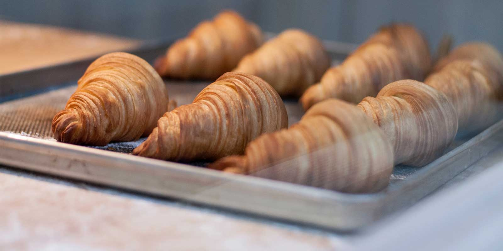 Closeup of freshly baked croissants on a baking tray.