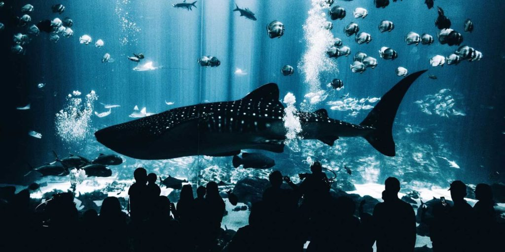 Photo of one of the aquariums at Georgia Aquarium, one of the attractions covered by the Atlanta CityPass.