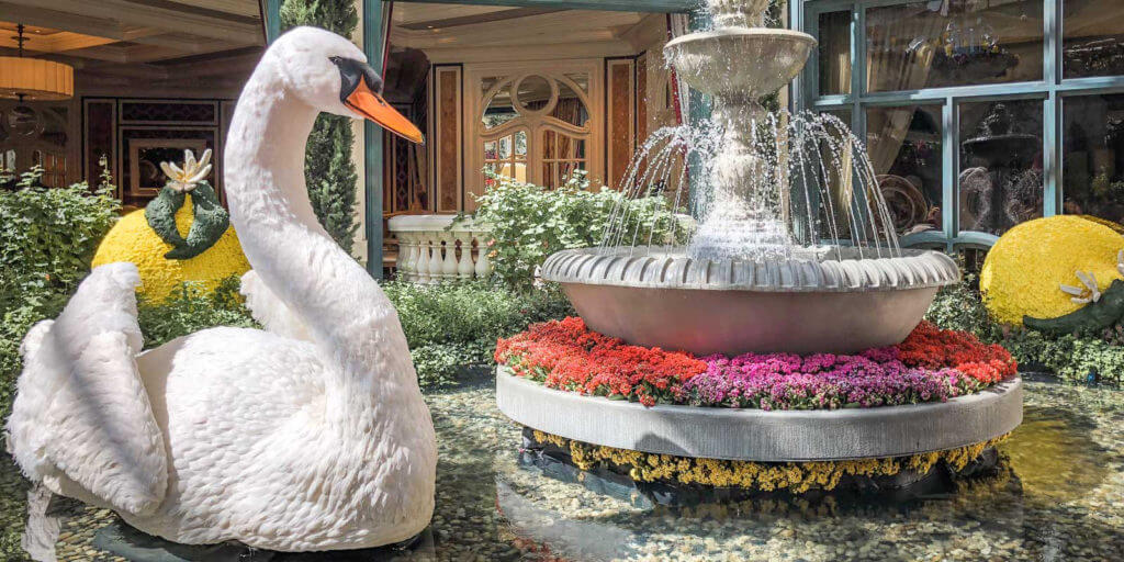 Photo of a floral display at Bellagio. A swan swims in a fountain with giant floral lemons in the background.