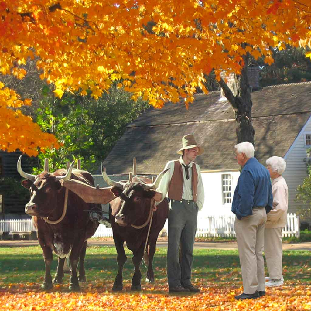 An elderly couple talks to a historian with 2 oxen at Old Sturbridge Village during the Fall season.