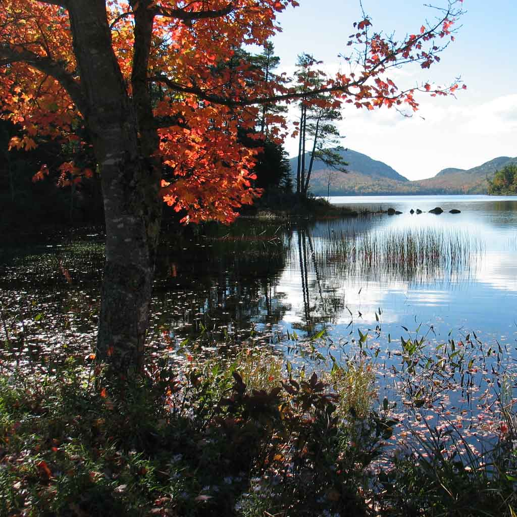 Tree with bright orange leaves next to a calm lake with mountains in the background.