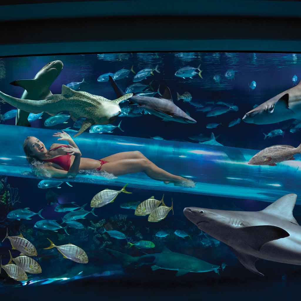 Photo of a woman going down a tube water slide through an aquarium filled with fish and sharks.