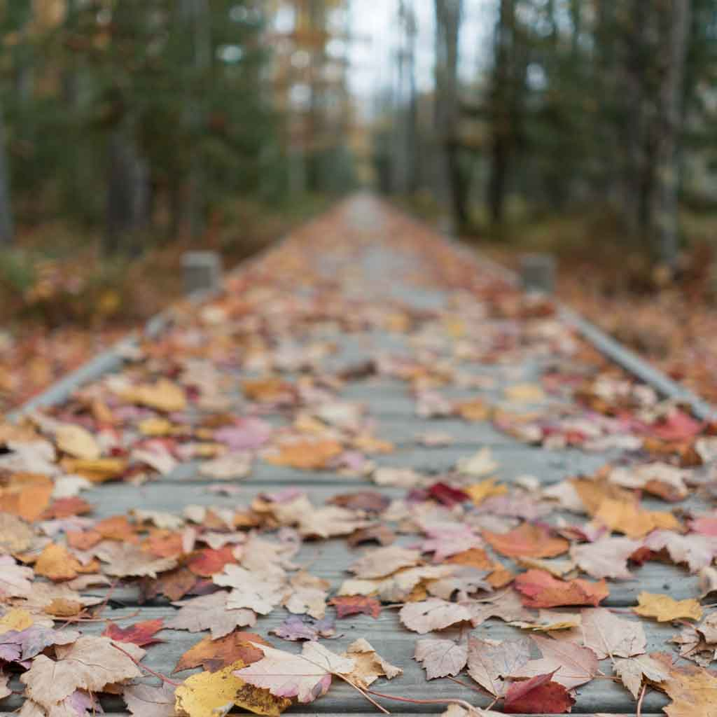A wooden boardwalk style path in a forest, covered in fallen leaves.