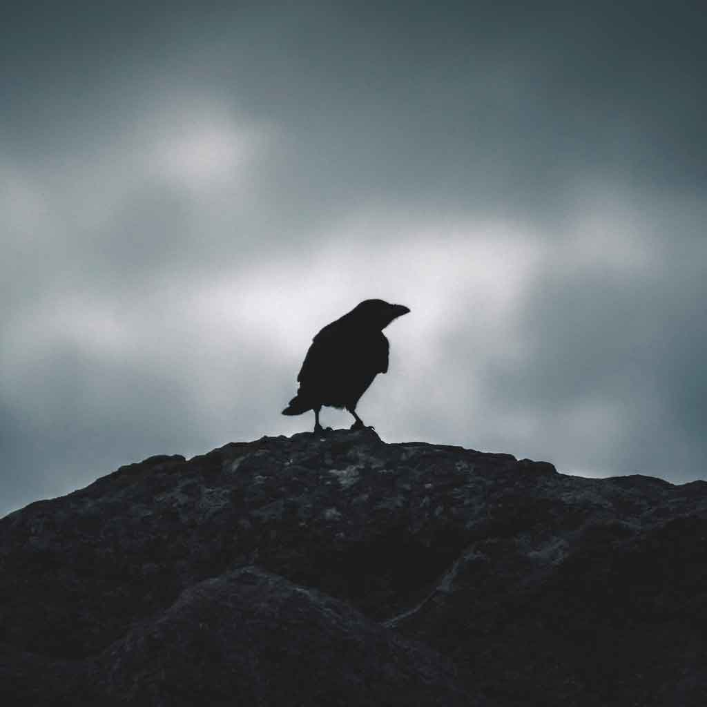 Photo of a black silhouette of a raven-like bird against gray skies.