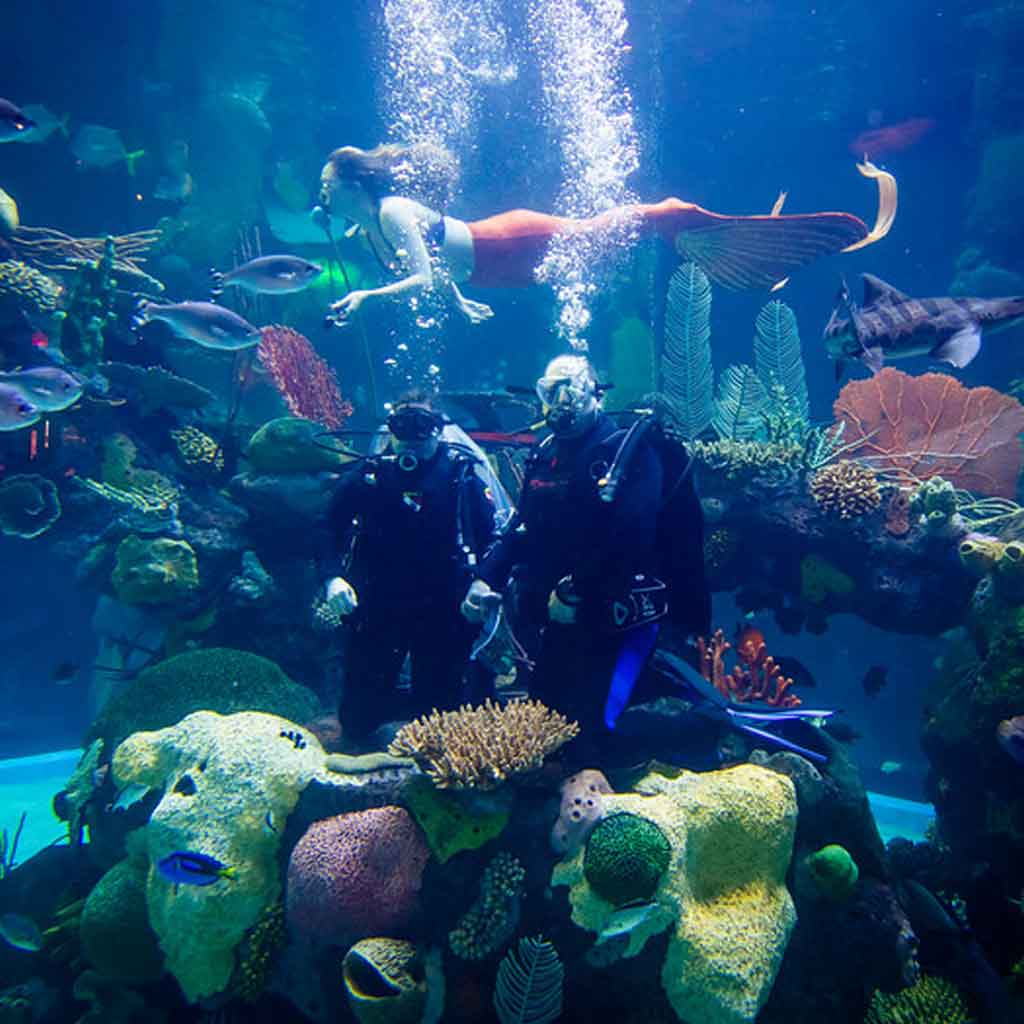 A scuba diving couple holds hands in an aquarium while a mermaid swims above them.