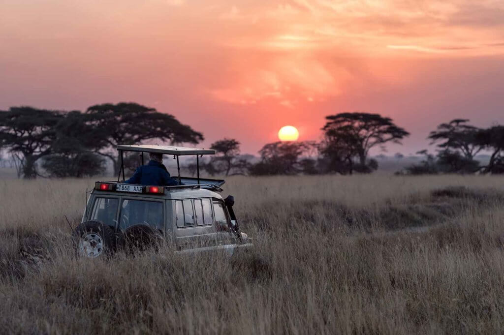 Landscape view of a Land Rover vehicle driving through tall grass flatlands with the sun setting in the background.