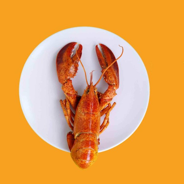 Closeup of a cooked red lobster on a white plate over a golden yellow surface.