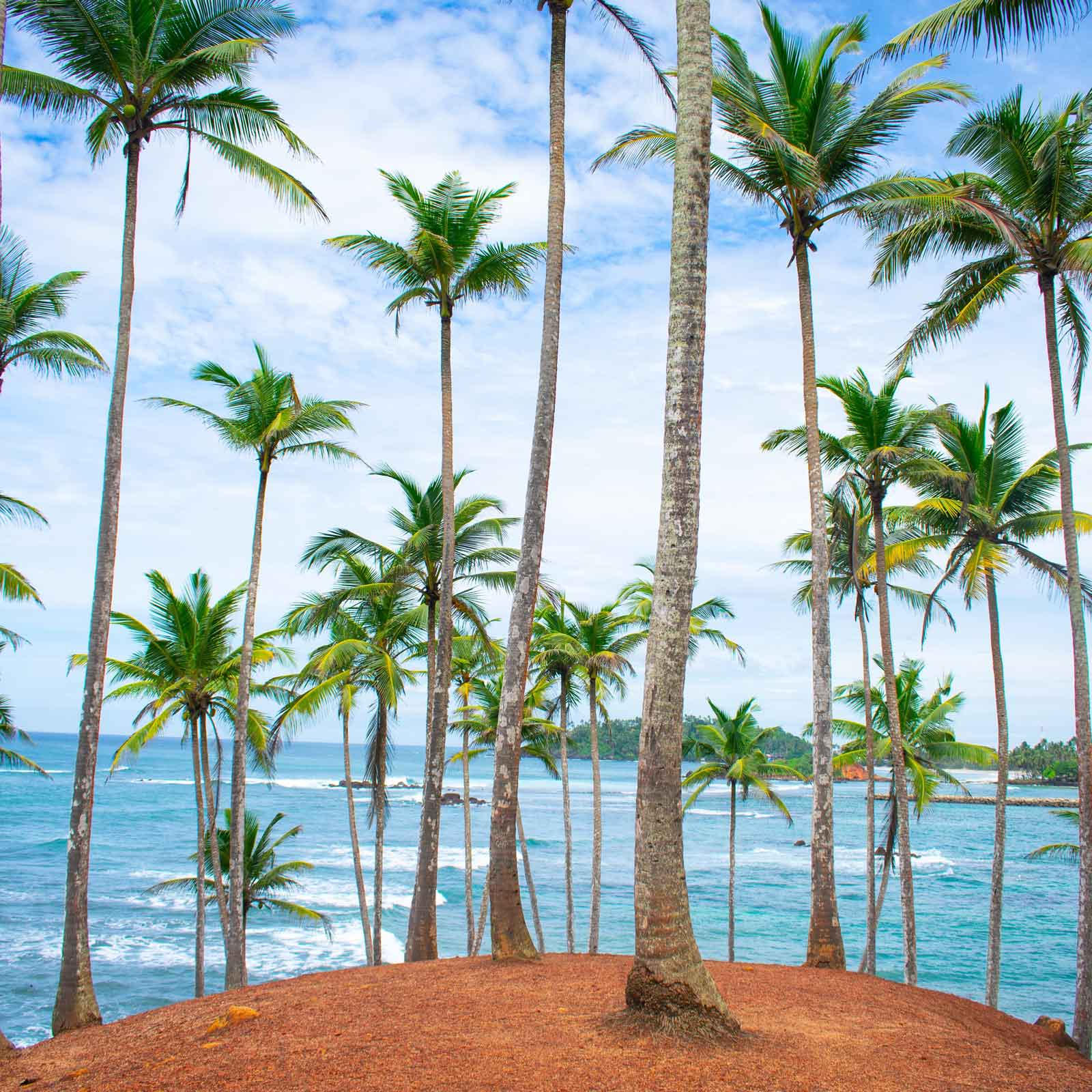 Photo of a hill with palm trees overlooking the ocean.