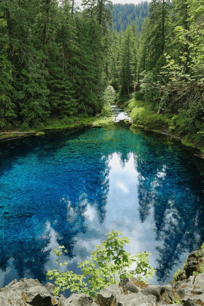 View of a pristine aqua blue pool set admist coniferous trees.
