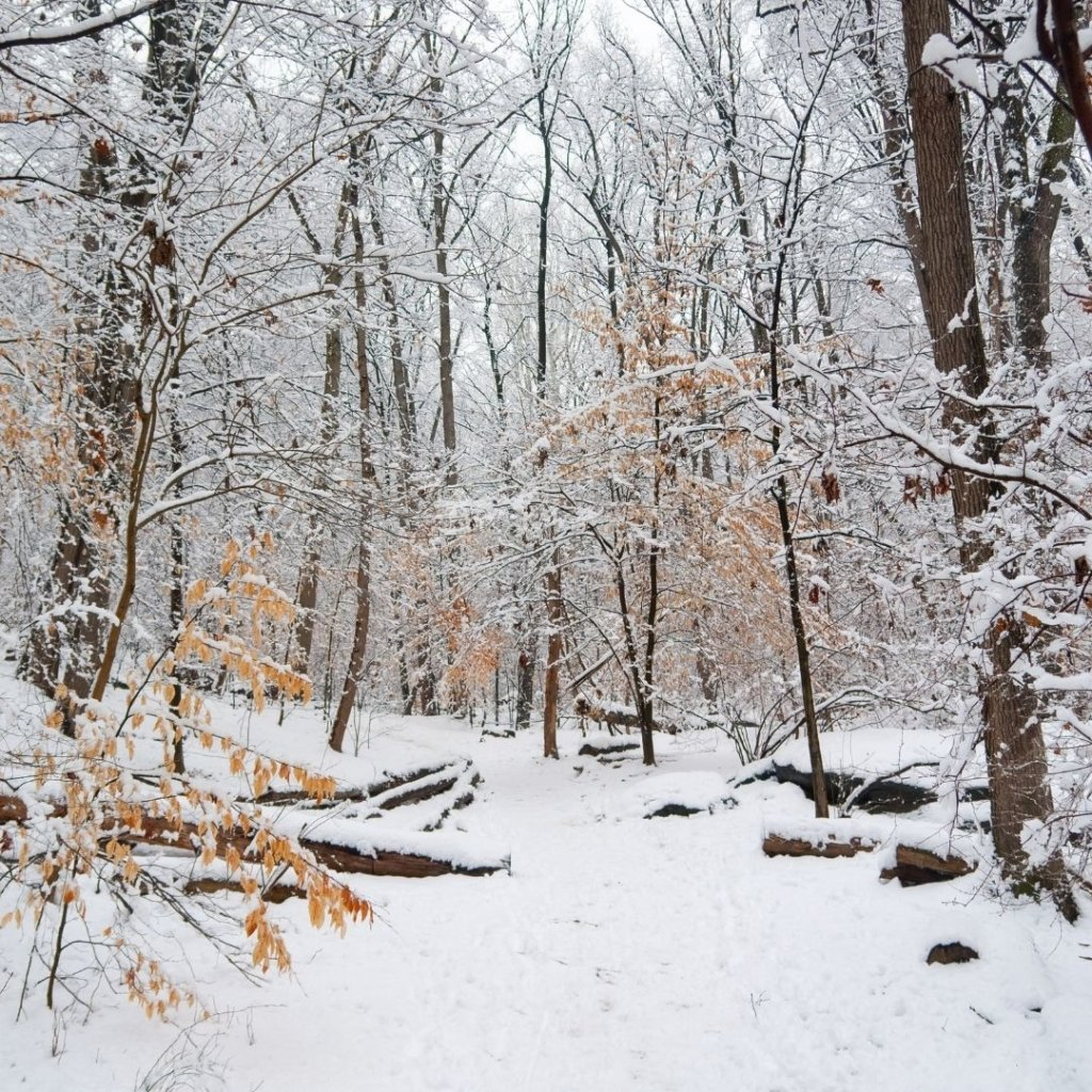 Photo of a snowy forest.