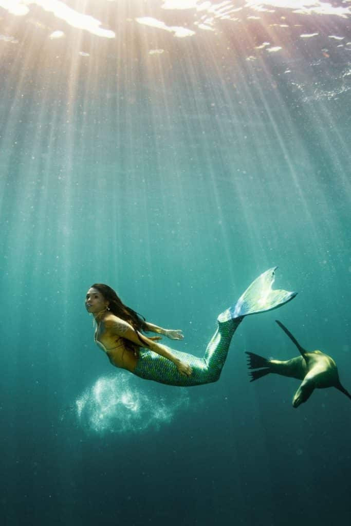 Photo of a mermaid swimming in the ocean next to a seal with sunrays beaming down toward her.