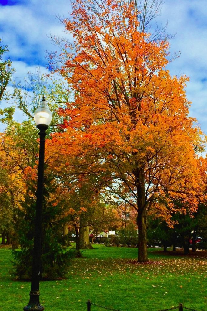 Photo of the Boston Common in Fall with orange and yellow Fall foliage.