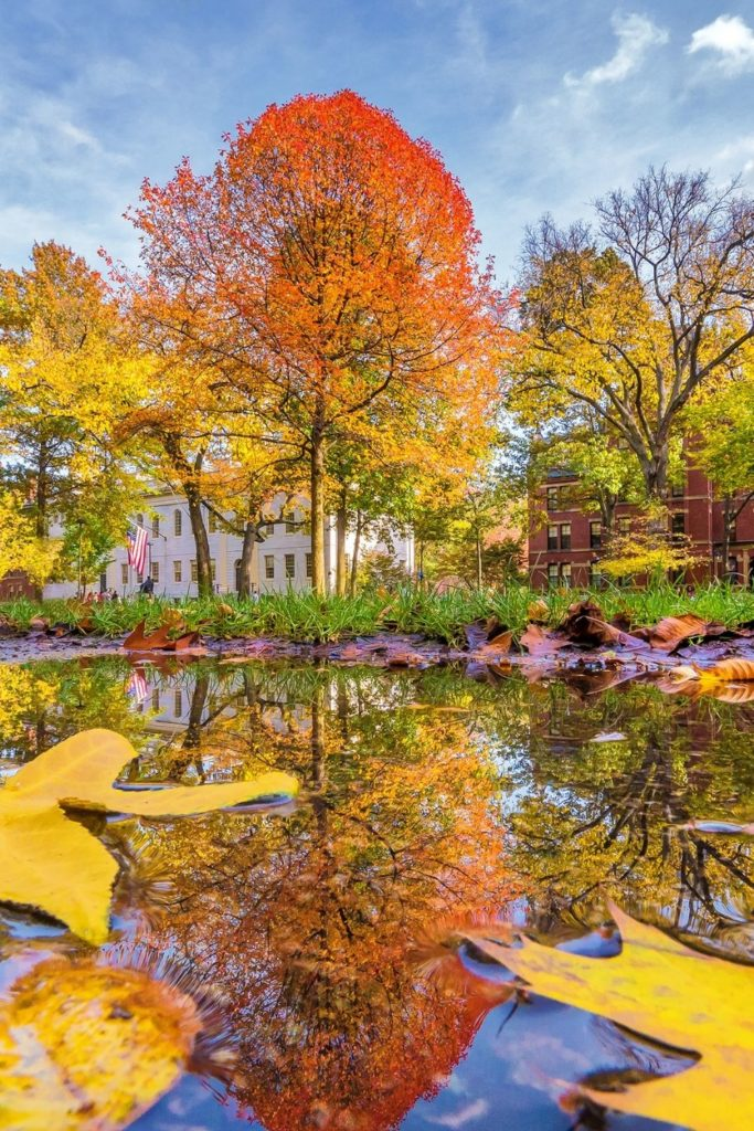 Photo of Harvard Square in the Fall with yellow and orange foliage.