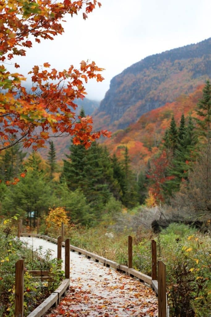 Photo of a wooden boardwalk running through Smugglers Notch State Park with Fall foliage.
