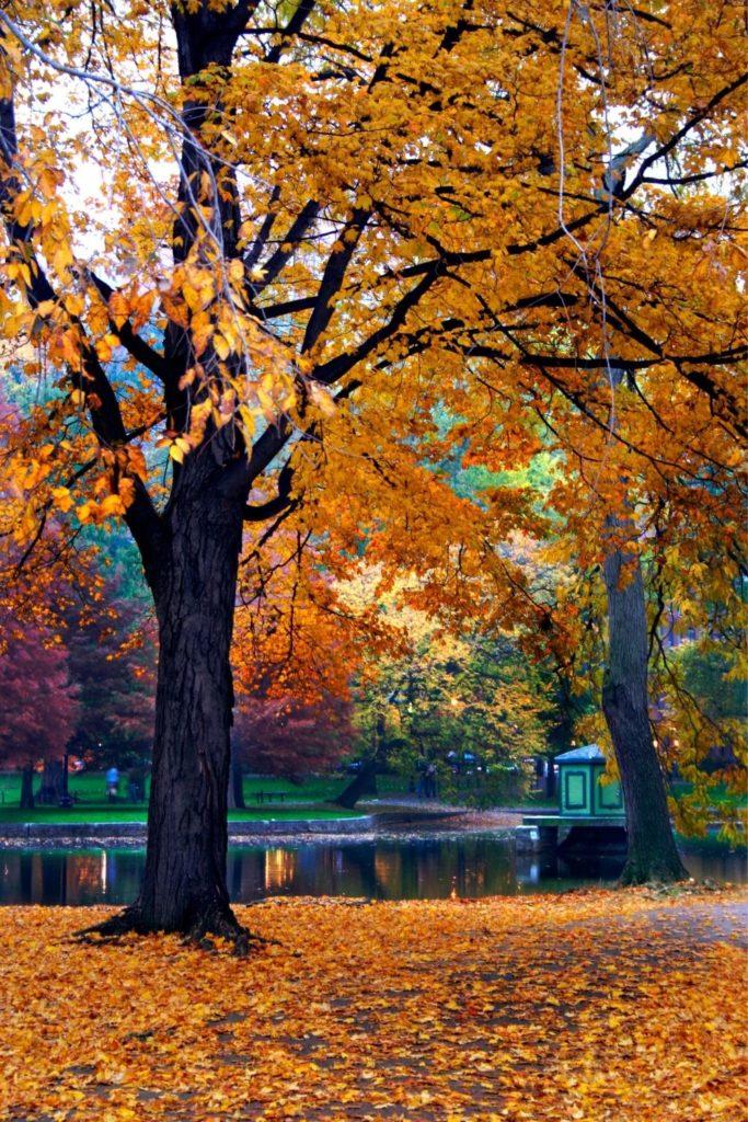 Photo of the Boston Public Garden in the Fall.