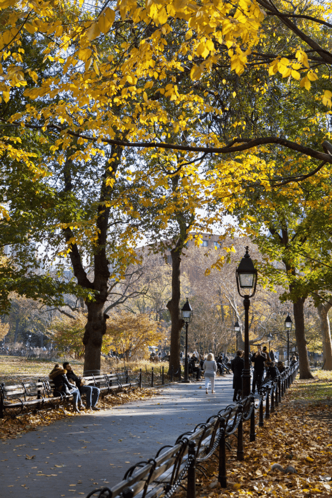 Photo of a path through Central Park with Fall foliage throughout the park.