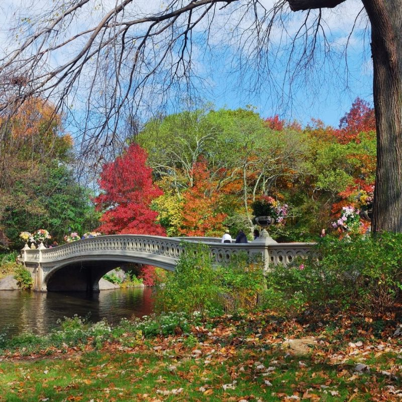 Photo of a bridge in Central Park with Fall colors surrounding it.