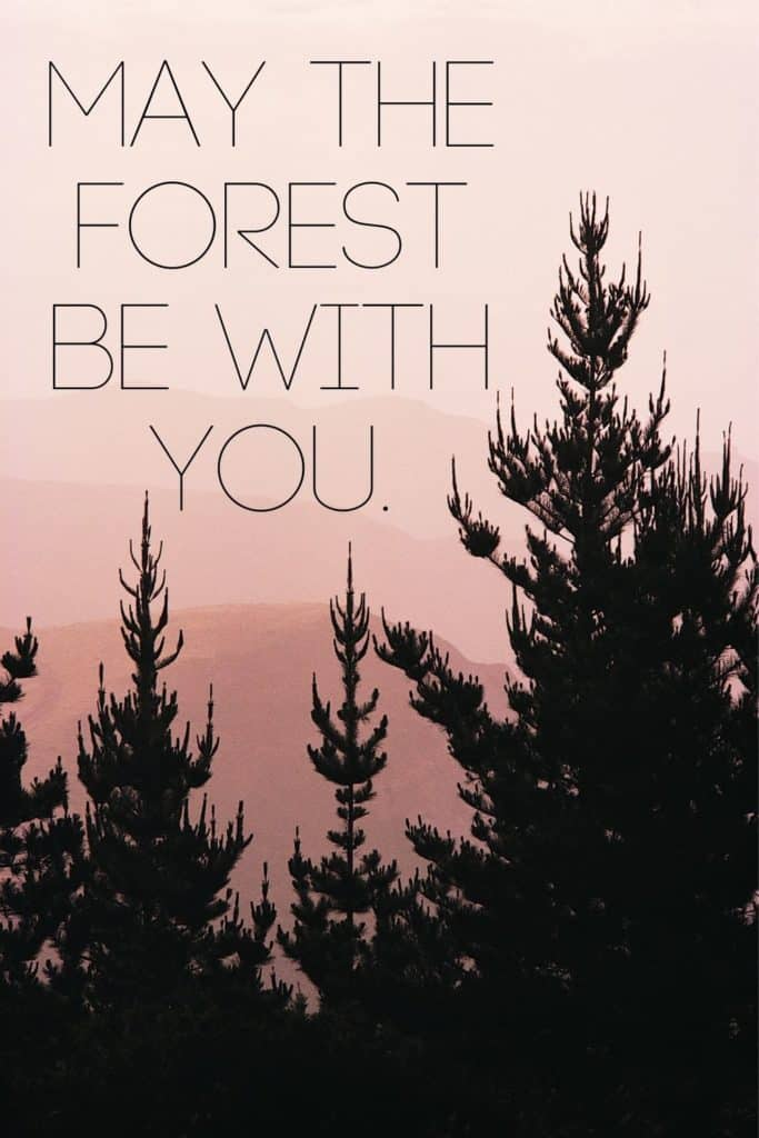 """Closeup of evergreen trees against a pink dusky sky. Text overlay reads """"May the forest be with you."""""""