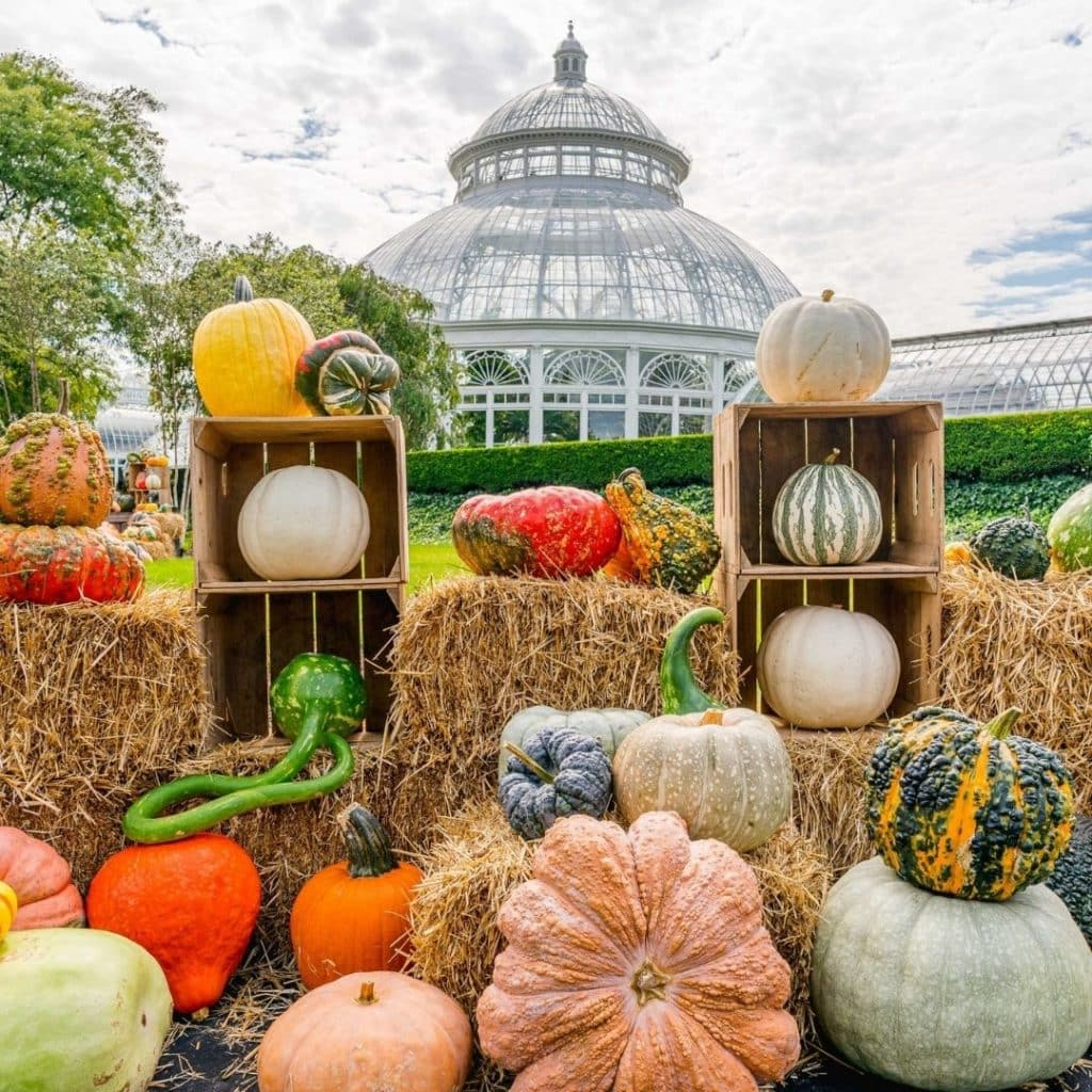 Photo of pumpkins and gourds displayed at the New York Botanic Garden.