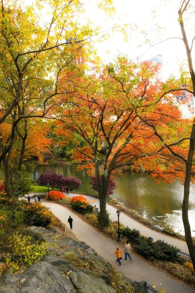 Aerial photo of the walking path along the reservoir in Central Park with lots of Autumn trees.