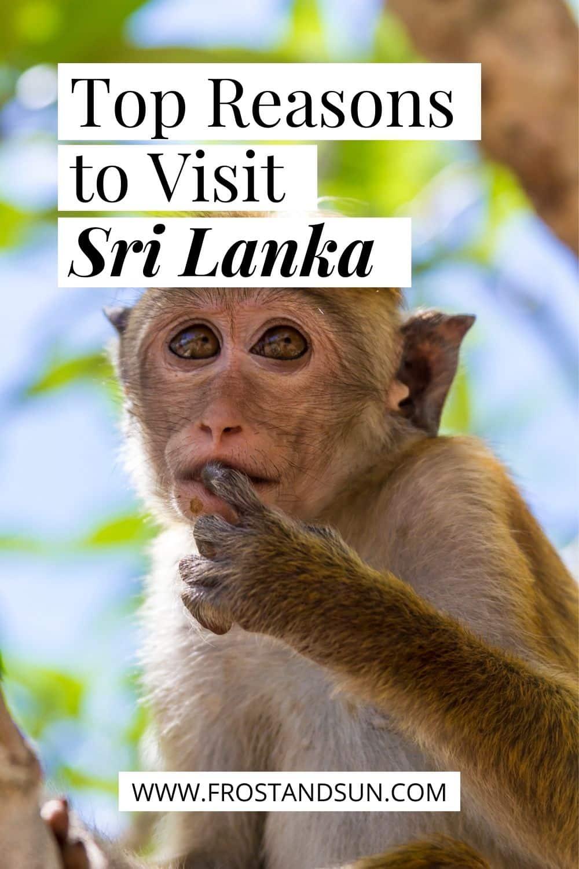 11 Top Reasons to Visit Sri Lanka