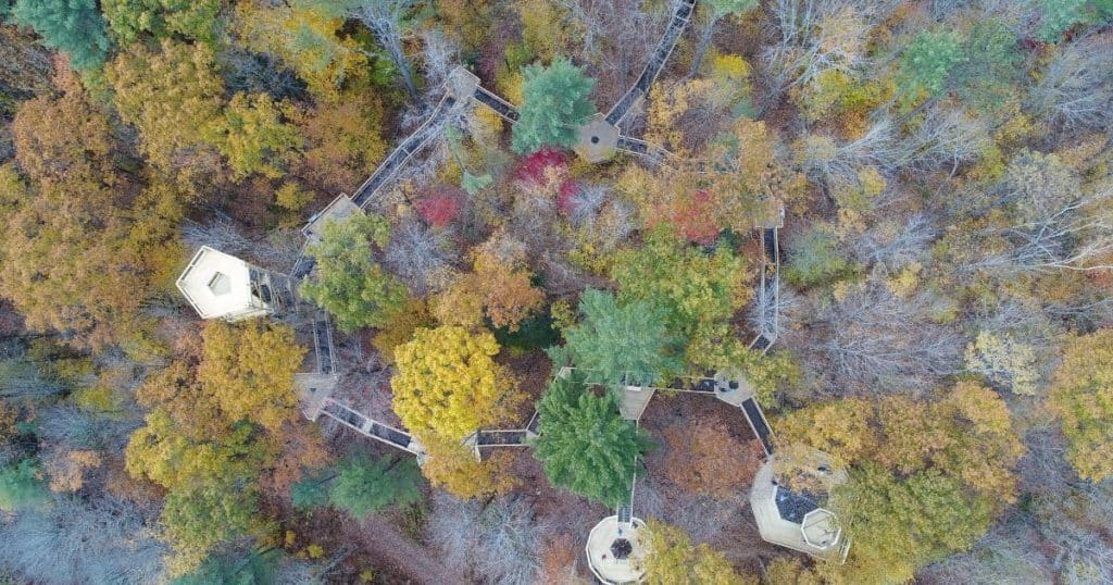 Aerial view of the forest canopy walkway at the Vermont Institute of Natural Science Nature Center.
